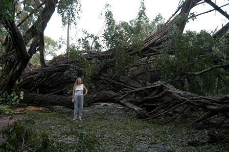 Here you can see the size of some of the trees that fell during the storm.