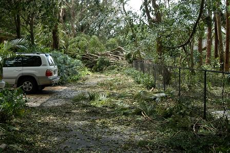 Again, the road leading to our facility was completely blocked by trees and debris from the storm.